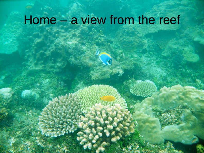 Home - a view from the reef